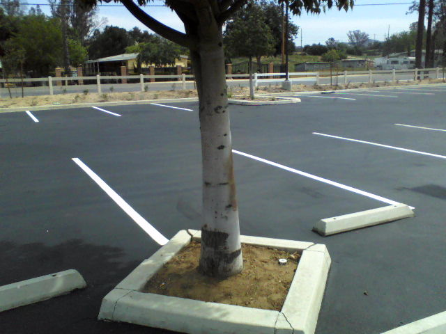 Hope the tree survives the seal coating that was applied and then wiped off