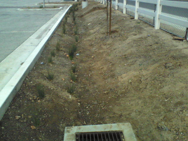 Wildomar's idea of a bioswale