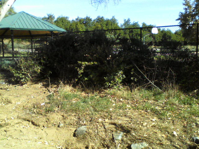 This overgrown bank is the location of what is supposed to be an outflow pipe at the north end of the park.